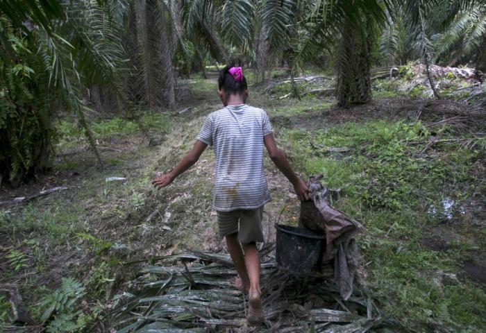 Child Labor in Palm Oil Industry Tied to Girl Scout Cookies