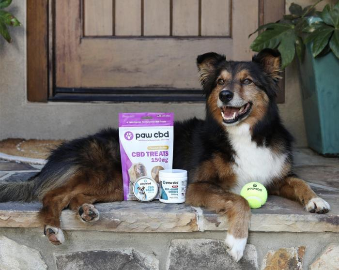 Getting Out More? Make Sure Your Dog Is Ready, Too!